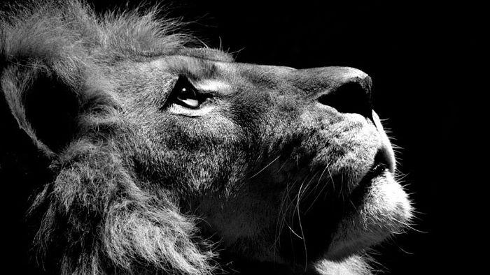 lion agence germain
